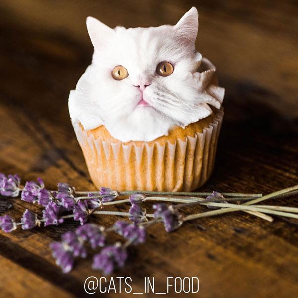 edit foto kucing