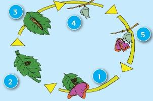 kelas 4 tema 6 subtema 1 pembelajaran 2