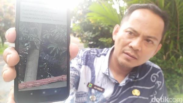 Tiga Ekor Suliri Muncul di Pemukiman Warga Cianjur, Disangka Siluman