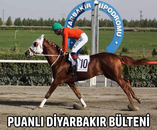 Puanlı Diyarbakır Bülteni, Programı