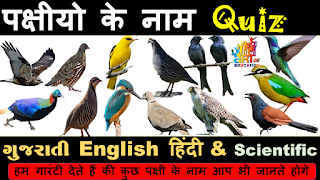 Birds Name   Different type of Birds Name   पक्षियों के नाम   All Birds  Name   पंछी के नाम    - YouTube