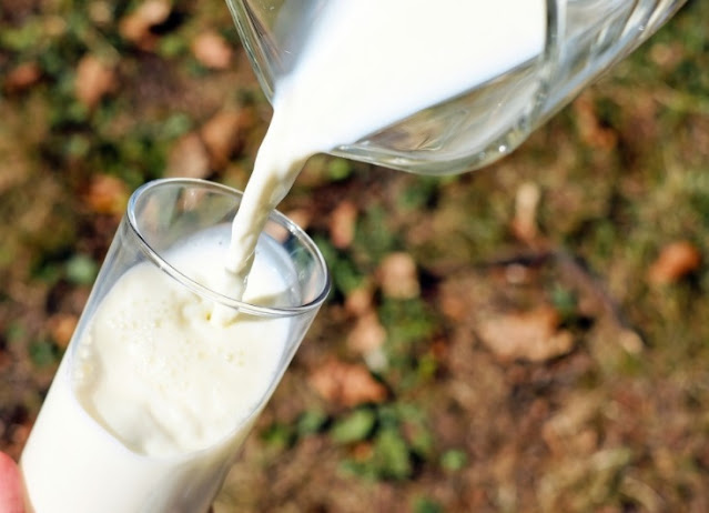 Researchers find toxin from maple tree in cow's milk