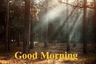 good morning photo nature