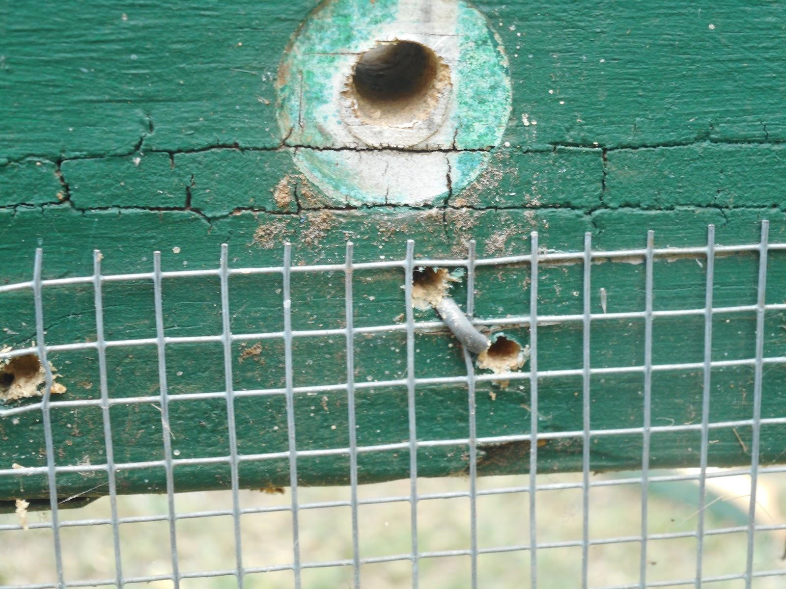 Gully Grove: Snake mesh