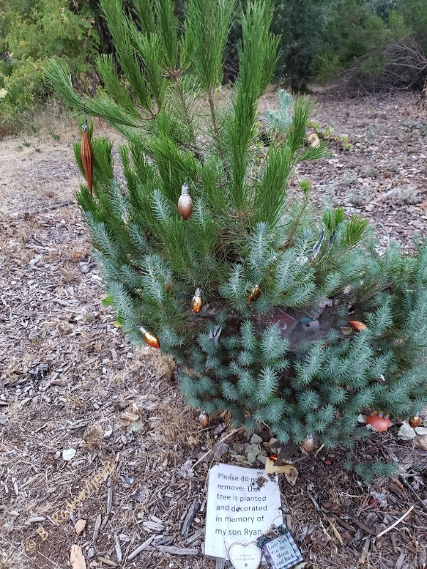 Two Surprises I Found at Larry Moore Park: Small Decorated Memorial Tree