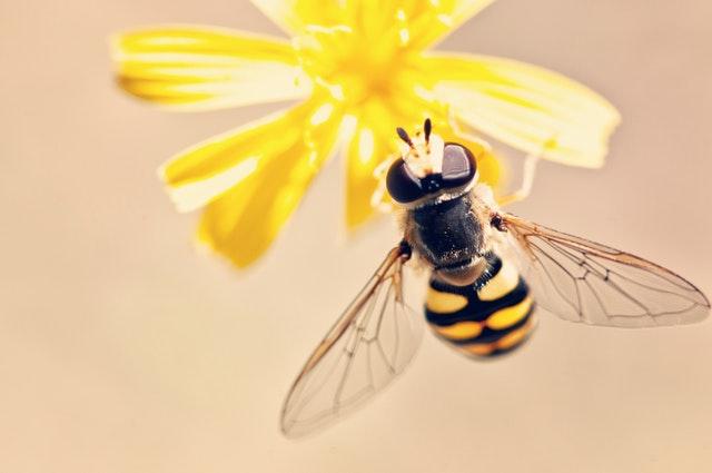 belajar dari lebah