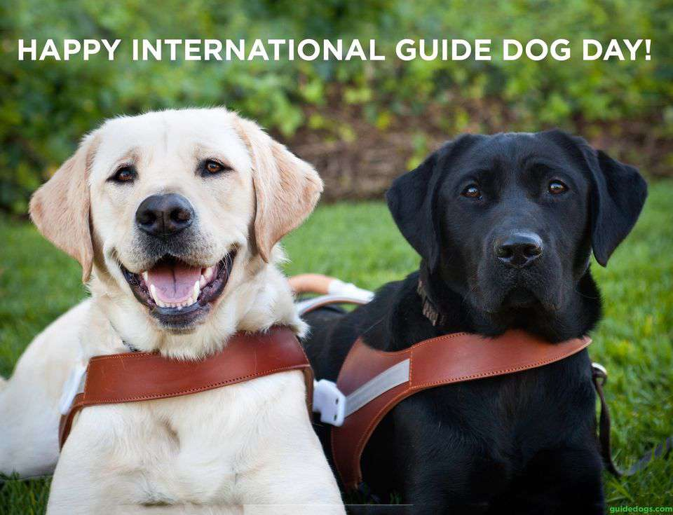International Guide Dog Day Wishes Images