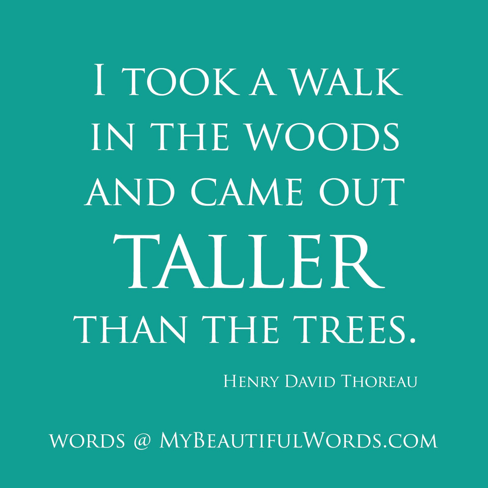 My Beautiful Words Taller Than The Trees