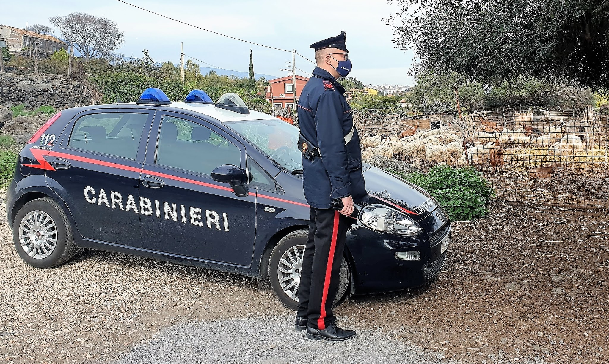 Sequestro caseificio allevamento Carabinieri