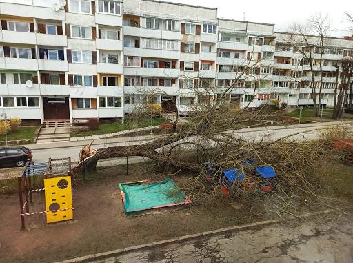 Vējš nogāž koku uz bērnu rotaļu laukumu Ogrē