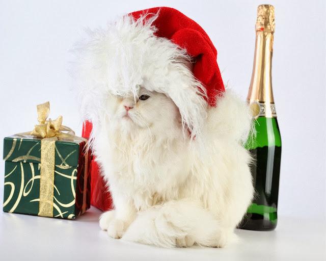 Kat met champagne en kerstcadeaus