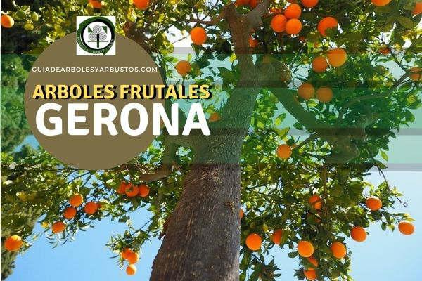 Arboles frutales en la Provincia de Gerona