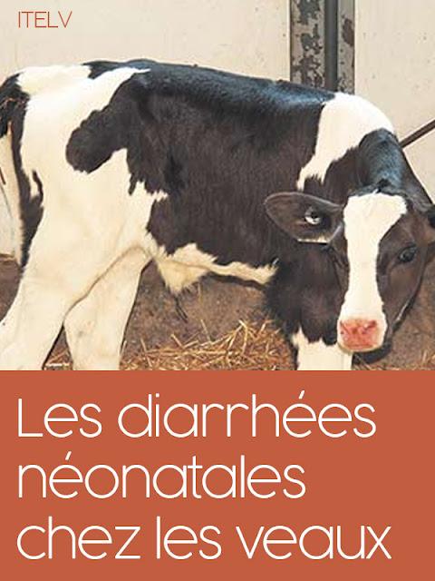 Les diarrhées néonatales chez les veaux  - WWW.VETBOOKSTORE.COM.pdf