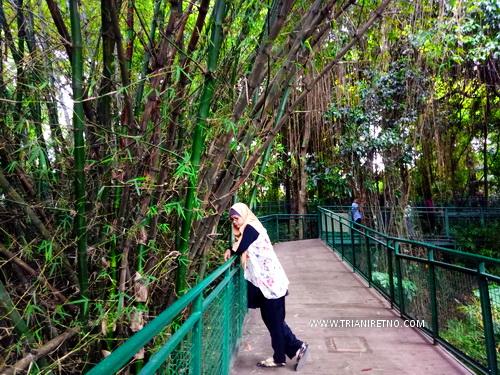 forest walk babakan siliwangi hutan kota di bandung