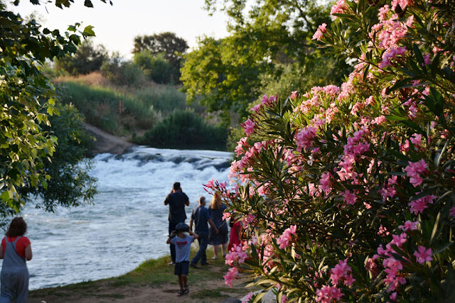 Flowers with a view on the jordan river waterfall