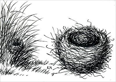 Verdón Embernagra platensis