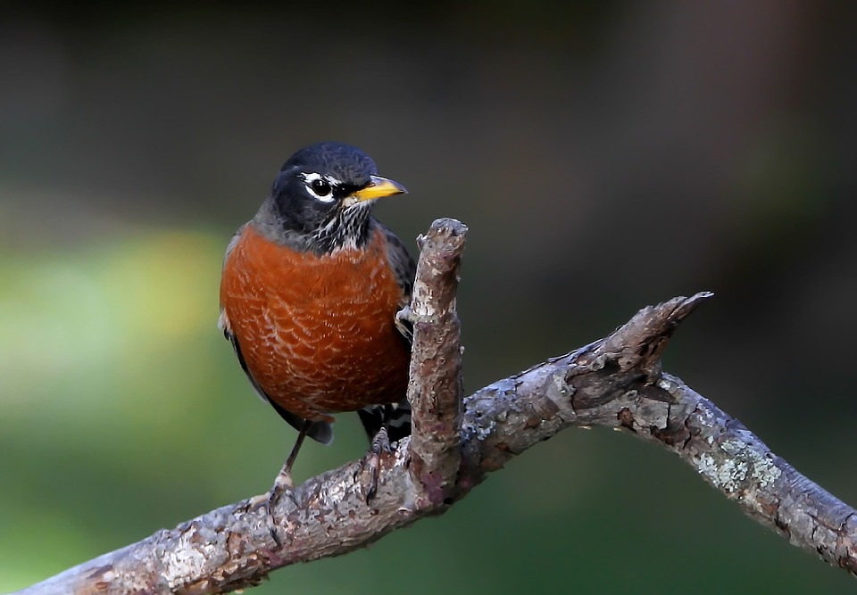What Food Can You Put Out For Robins