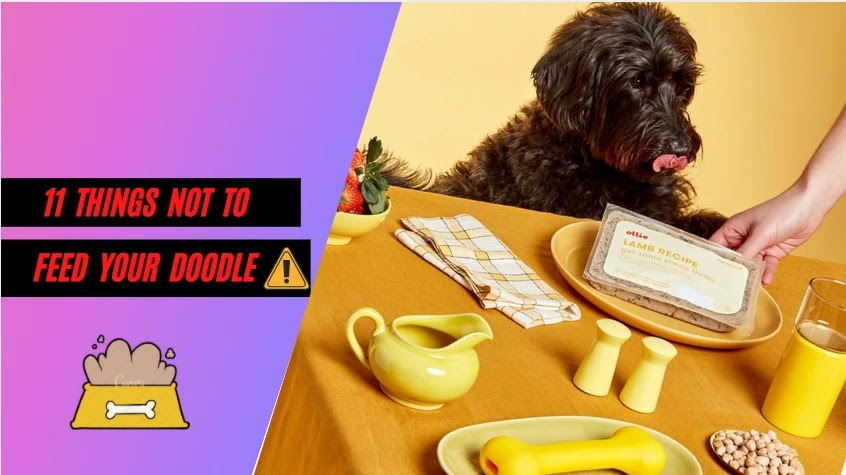 11-Things-you-should-never-feed-your-labradoodle