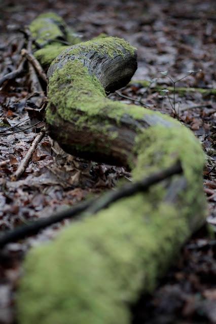 serpent branch