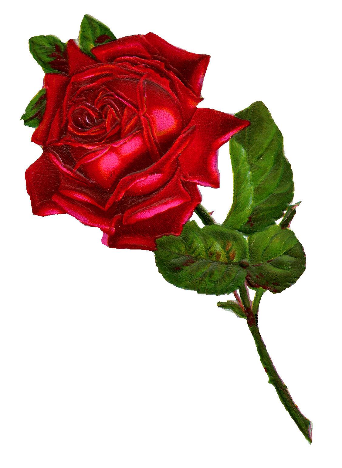 Antique Images: Stock Red Rose Digital Clip Art