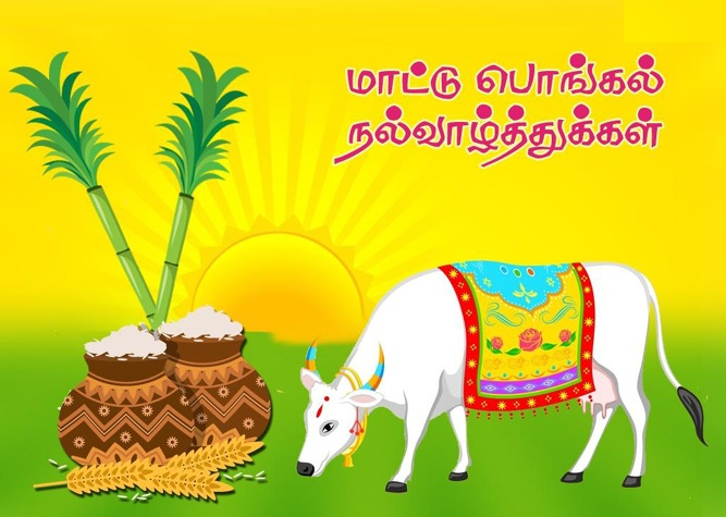Happy pongal wishes ttjob happy pongalpongal greetinghappy pongal wisheshappy mattu pongalpongal greetingpongal wishespongal wishes imagepongal wishes picturepongal greeting m4hsunfo