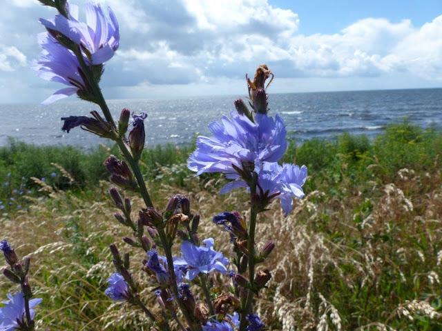Schweden Urlaub Anreise Camping Urlaub mit Hund Ystad Meer Küste Entspannung