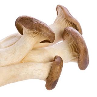 Mushroom training center in Maharashtra