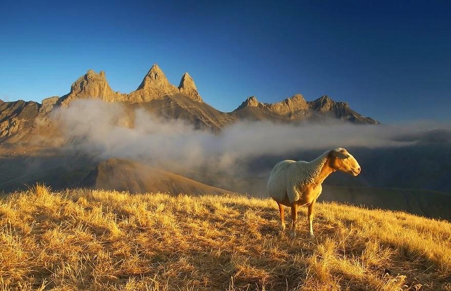 Fotografías Impresionantes De La Naturaleza Del Fotógrafo: Las Mejores Fotografías Del Mundo: Imagenes