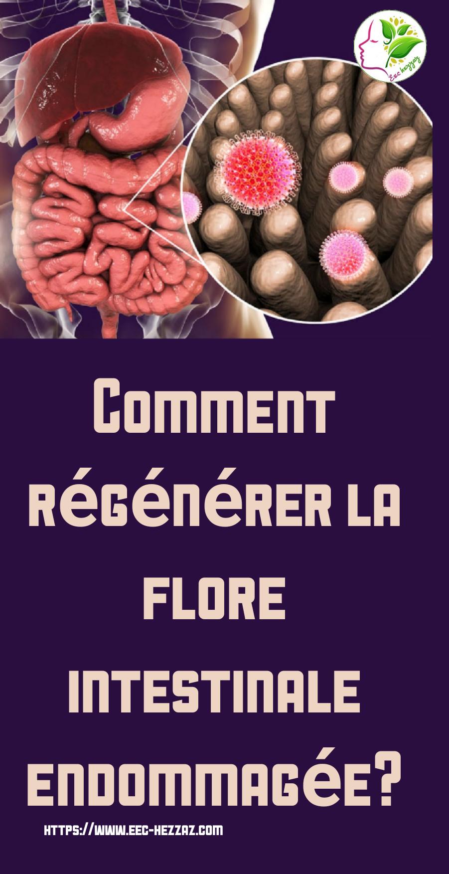 Comment régénérer la flore intestinale endommagée?