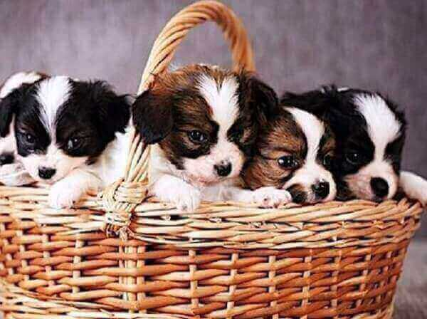 Training of Puppies Socializationpuppies socialization checklist window how to before vaccinations schedule class chart near me classes