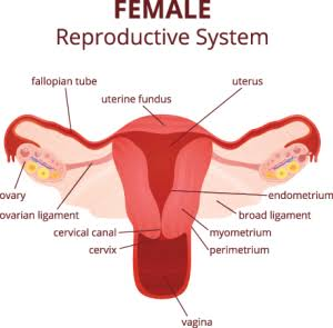 Early Signs Of Ovarian Cancer Everyone Should Know Opera News