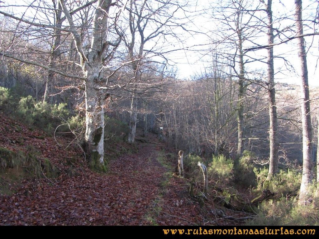 Ruta Tromeu y Braña Rebellón: Camino entre el hayedo