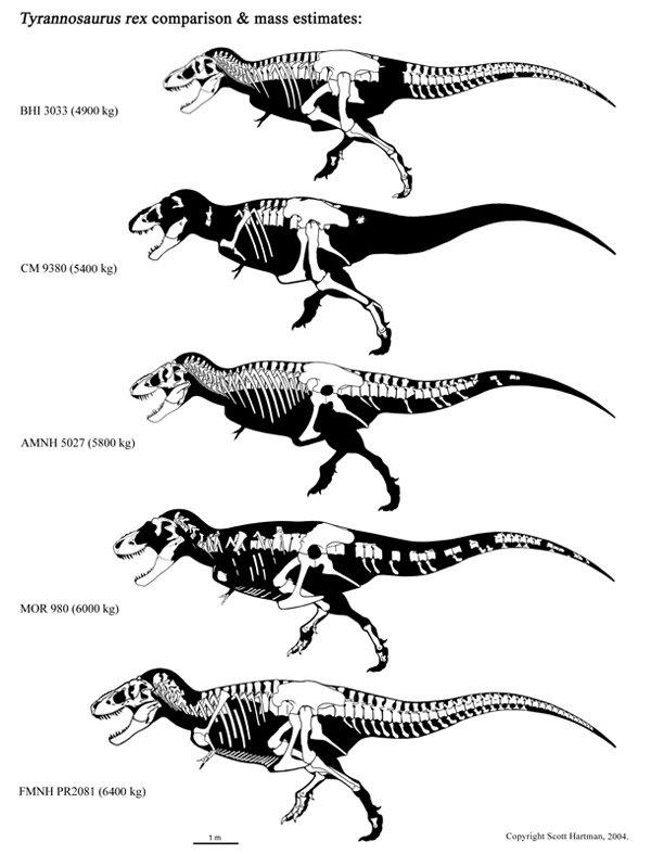 Jurassic Park: Tiranossauro