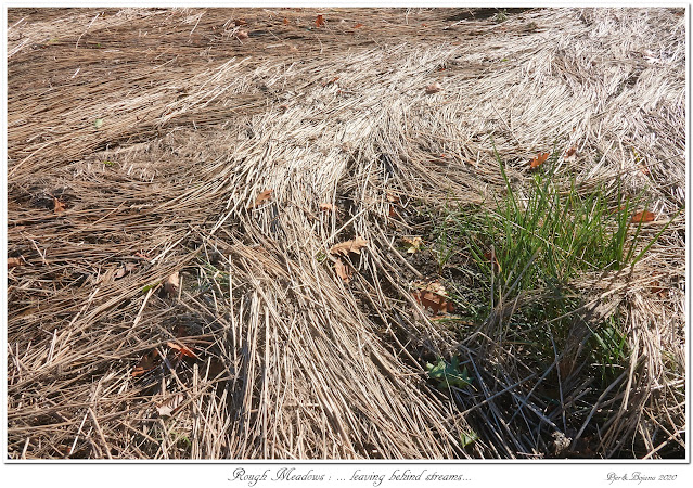 Rough Meadows: ... leaving behind streams...