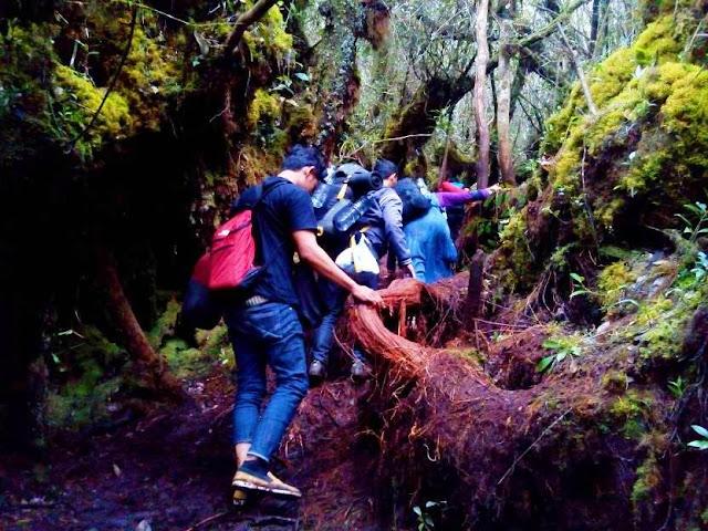 Hutan Lumut Gunung Sibuatan