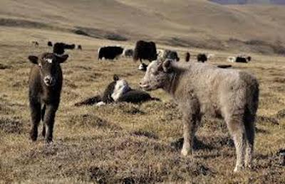 Une odyssée tibétaine et népalaise