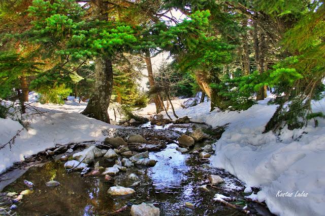 ρυακι,νερο,παγος,χιονι,πεζοπορια,βουνο,ελατα,φωτο Κώστας Λαδάς