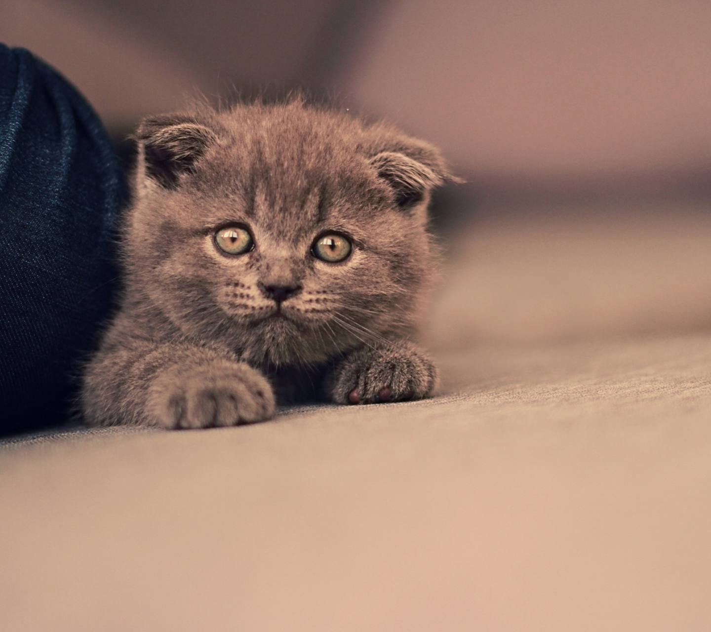 Samsung Galaxy S3 Wallpaper Sweet Cat Hd Wallpapers 9to5wallpapers