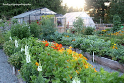 The Nitty Gritty Potager & Greenhouse