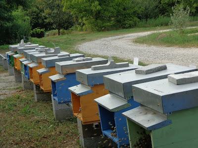 fabrizio mosca apicoltore manerbio