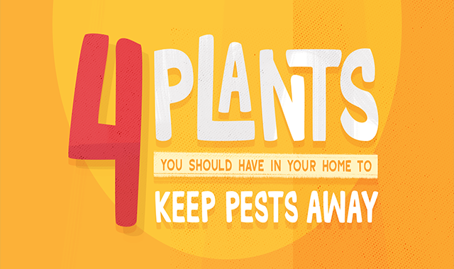 4 Plants You Should Have in Your Home to Keep Pests Away #infographic