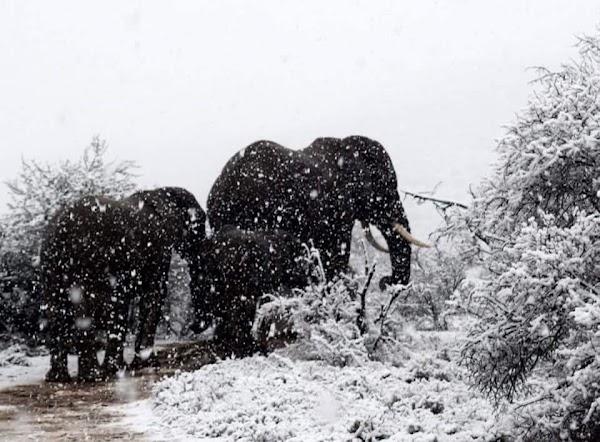 ( FOTOS , VIDEO. ) Impresiónante Inusual Nevada En Sudáfrica