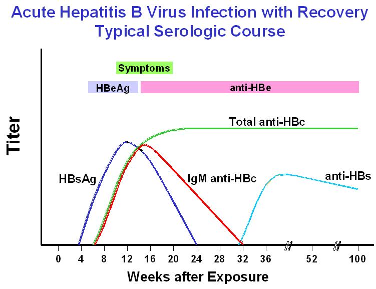 Jayhawk Infectious Diseases: Hepatitis B