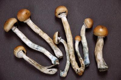 Псилоцибиновые грибы - размеры и сроки наказания за грамм псилоцибиновых (галюциногенных) грибов