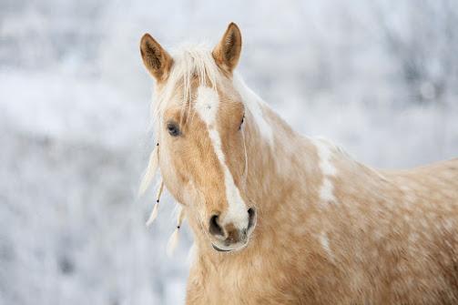 أجمل صور خلفيات خيول 1