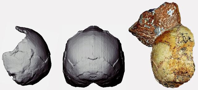 Crânio de Homo Sapiens, Homo Sapiens, Apidima, Homo Sapiens na Grécia, Descobertas Históricas