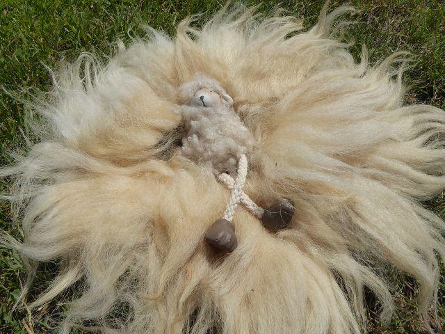 Projekt: Decke aus Schafwolle II Teil 9 Wolle vom Brillenschaf