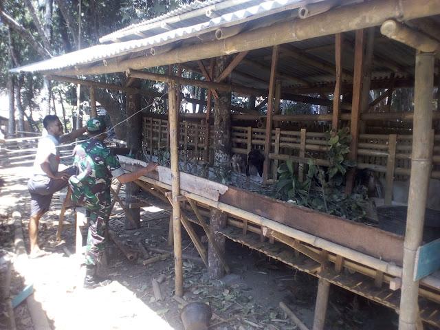 Babinsa Manisrenggo sambangi peternak kambing guna berbagi ilmu