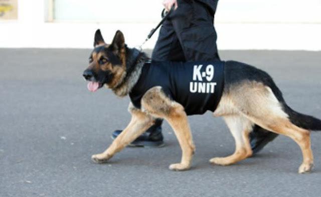 Γνωρίστε την Ομάδα των Αστυνομικών Σκύλων K-9 της Ελληνικής Αστυνομίας (βίντεο)