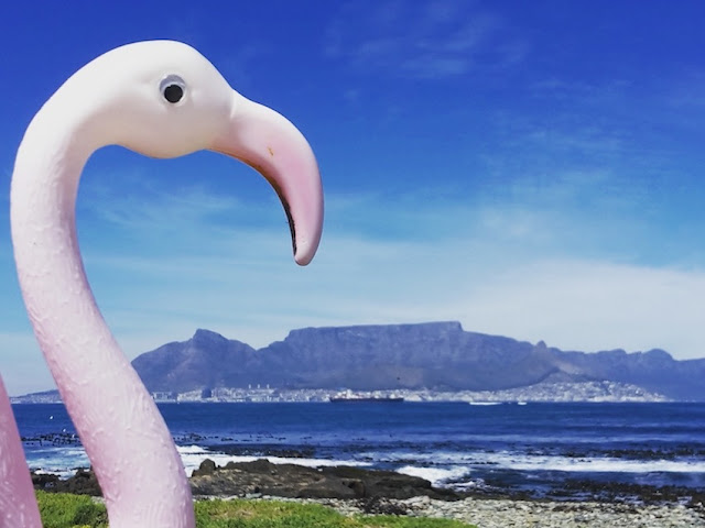 Travel toy flamingo looks at Table Mountain, Cape Town